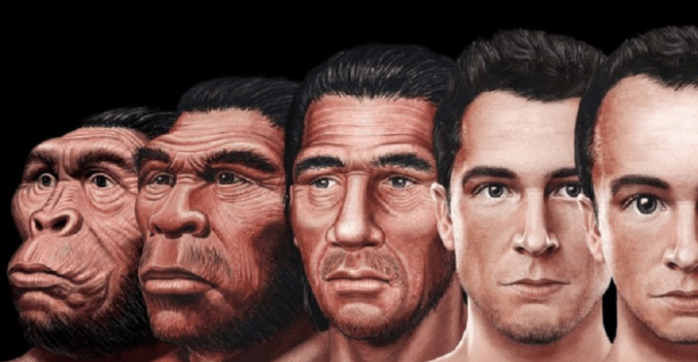Evolution of the human face